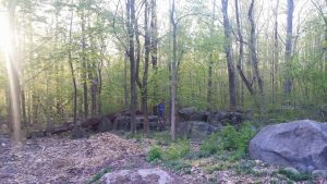 Woods at Greenshire